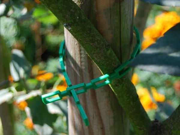 Pflanzenbinder Baum